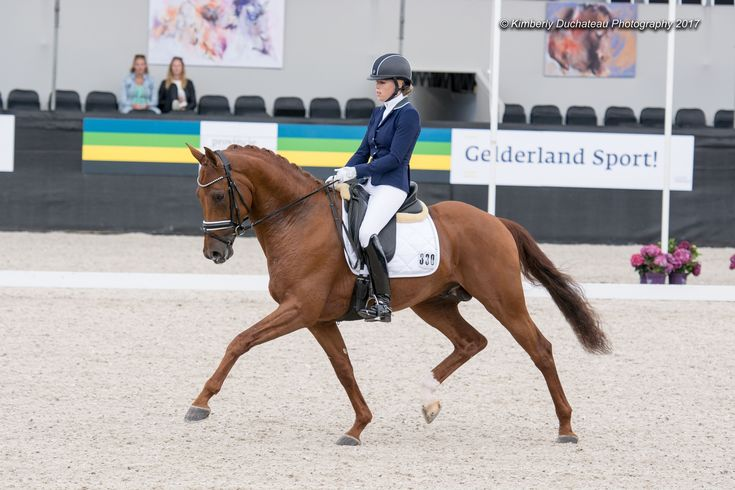 paardenfotografie , paarden , hengsten , merrie , sportpaarden , dressuur , draf , stap , galop , Grandprix ,  dressuurpaarden , dressuurruiters , sportmensen , horse photography , horse , horses , stallions , mare , gelding , Dressage , Dressage competition , Dressage movements , trot , gallop , walk , Dressage rider , Kwpn , BWP ,  Equine , Equinesports , Equine photography  , Equiestrian , Pferd , Horseriding , Horses of pinterest , Pony , Paardrijden , Cheval , Love , Pferde , Kimberly