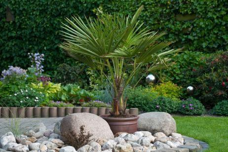 Clases de Palmeras para Jardines - Para Más Información Ingresa en: http://jardinespequenos.com/clases-de-palmeras-para-jardines/