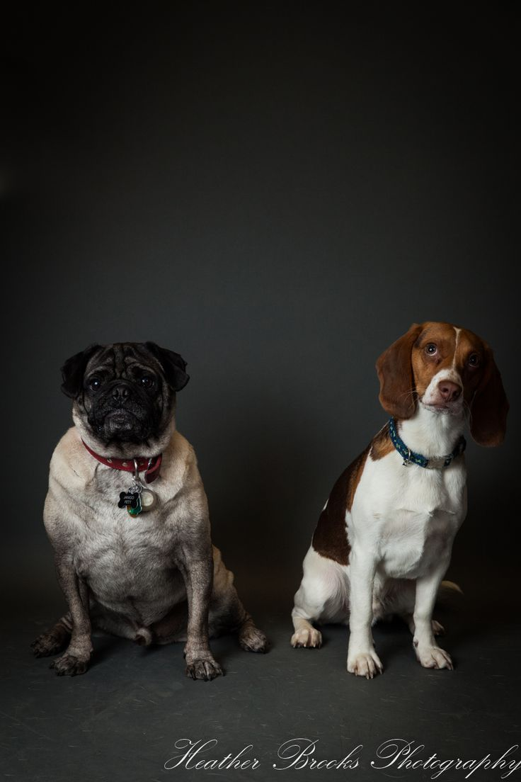 #essexontario #petvalu #petphotography #dog #dogphotography #essexphotographer #windsorfamilyphotographer #dogportrait#funny
