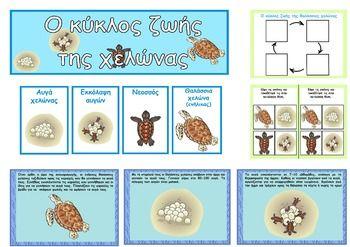 Το πακέτο περιλαμβάνει εικόνες που μπορούν να χρησιμοποιηθούν κατά τη διάρκεια της διδασκαλίας του κύκλου ζωής των θαλάσσιων εικόνες. Συγκεκριμένα περιλαμβάνει: 4 καρτέλες με λεξιλόγιο 3 καρτέλες με πληροφορίες 2 καρτέλες με το κύκλο ζωής της θαλάσσιας χελώνας 1 banner σε μέγεθος Α4 και Α3 για την πινακίδα.  Όλο το υλικό παρουσιάζεται στην εικόνα.