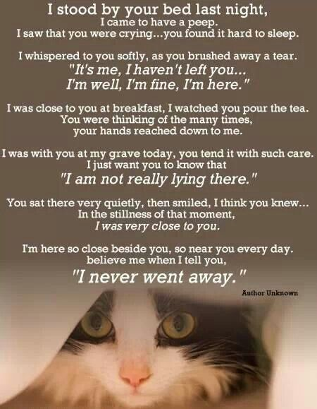 Rainbow bridge poem this shows the love we all have for our four legged friends they will never forget.. William❤️