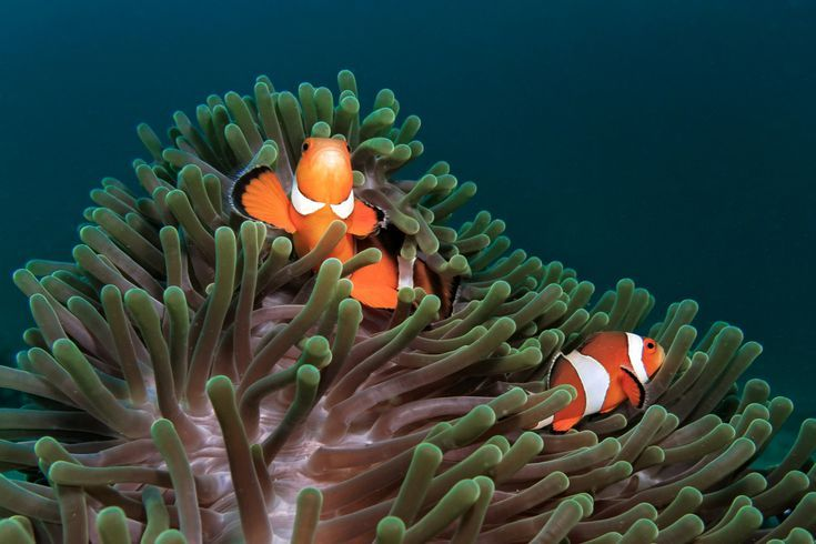 When Both Benefit: Mutualism Explained: Mutualism: Symbiotic Relationships