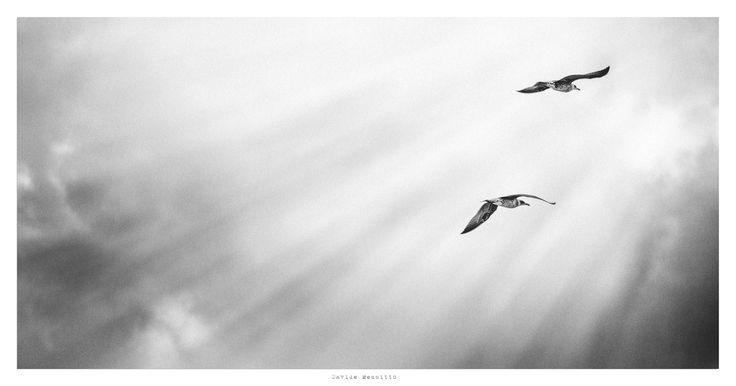 Gulls by Davide Mennitto www.facebook.com/davidemennittofineartprint