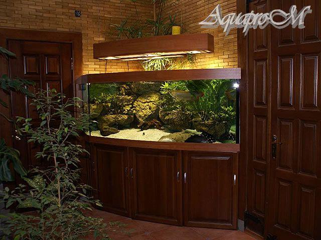 Пресноводный угловой аквариум с панорамным стеклом. Оснащён механической и биологической системой фильтрации. Подвесным светильником, с встроенными МГ-лампами. Общий объём воды около 500 литров. Возраст аквариума более 5 лет.