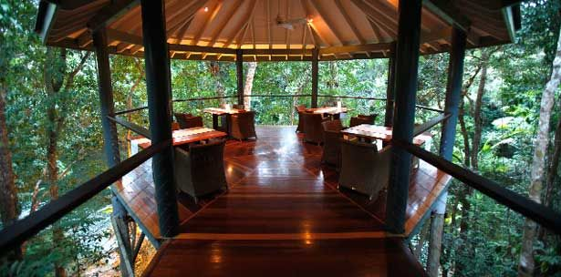 Silky Oaks Lodge, 5* ecolodge. Dining in the trees