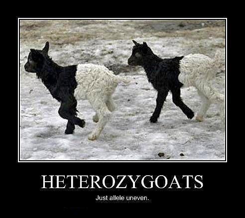 Heterozygoats.
