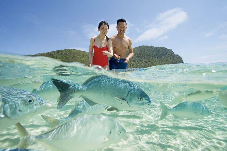 Explore NSW's Howe Island, RoyalAuto Nov 2106. #lordhowe #ordhoweisland #nsw #feedingfish #nedsbeach