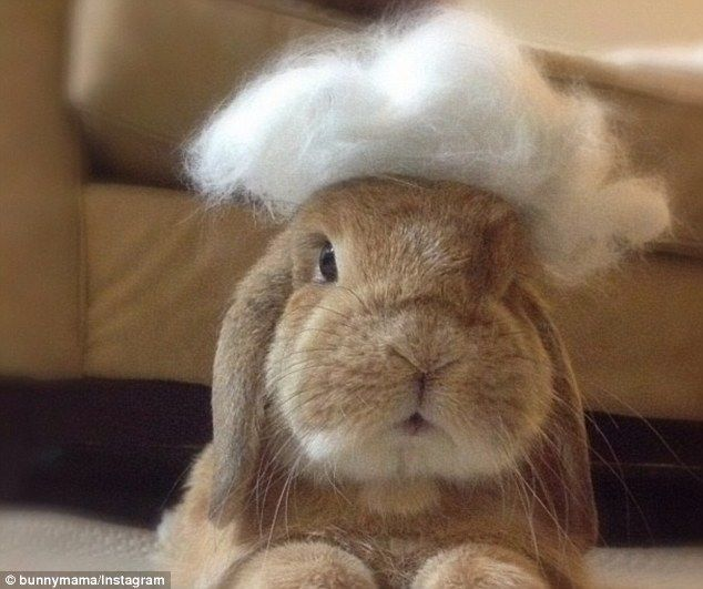 Sweet Rambo bunny went over the rainbow bridge today Feb 6, 2009 - Dec 14, 2013. Eddy & Rambo bunny are very popular and loved on Instagram @ bunnymama. He leaves behind quite a legacy. Adopt don't shop!