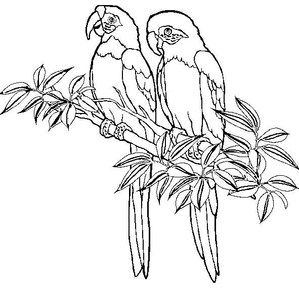 Two Macaws | Coloring Pages >> Animals | Pinterest | Colores, Aves ...