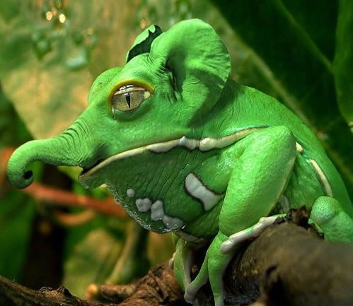 is it a frog or a baby green elephant, I don't know, but it's cute