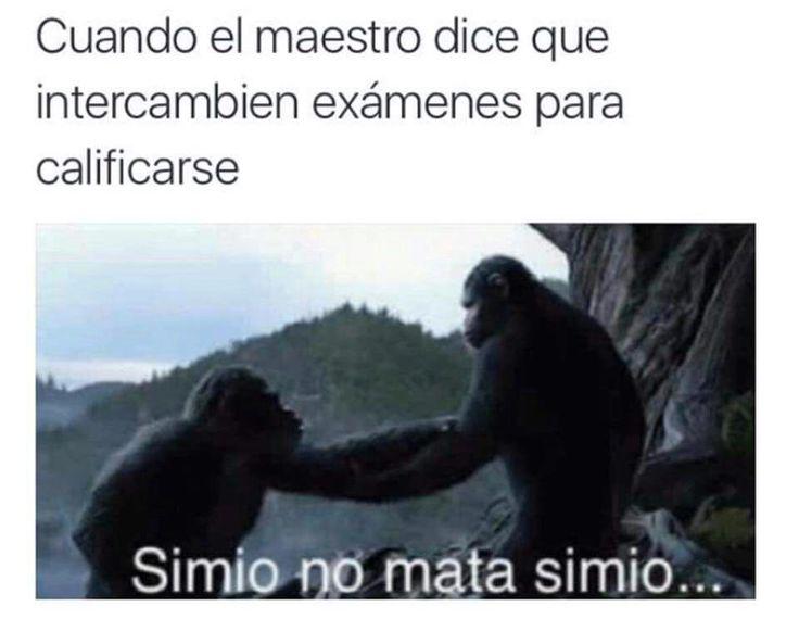 Cuando el maestro dice que intercambien exámenes para calificarse... Simio no mata simio