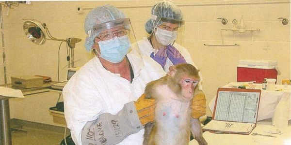 SPEAK OUT! TELL SENATOR BILL NELSON: End Federal Grants Used For Primate Torture At The University Of Florida!  Taxpayers unwittingly give them approximately $400 million each and every year!  Document after document reveals an unending series of UNNECESSARY and BRUTAL experiments!  PLZ S/S