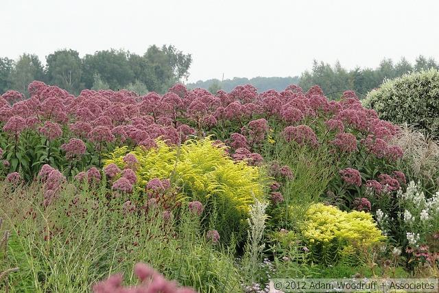 Eupatorium solidago piet oudolf garden designer for Designing with plants oudolf