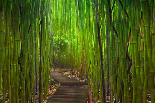 bamboo - I love the color and the sence of mistery it gives you.