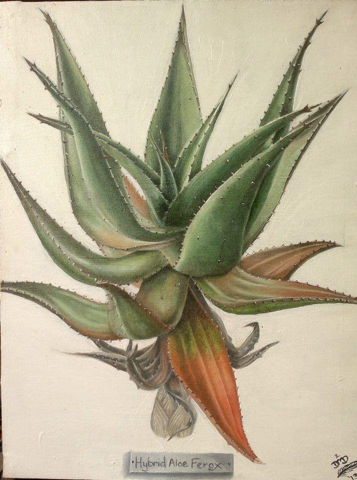 Hybrid Aloe Ferox {Commission} ~ Block Mounted Oil Painting by Dawn Du Preez #DawnDuPreez