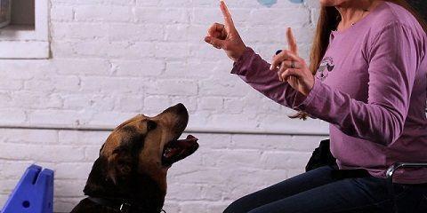 Cara melatih anjing agar berbicara http://www.anjinglovers.com/cara-melatih-anjing-berbicara/ #anjing #anjinglovers #anjinglover #dog #doglover #pet #animal #melatihanjing #pelatihananjing #caramelatihanjingberbicara