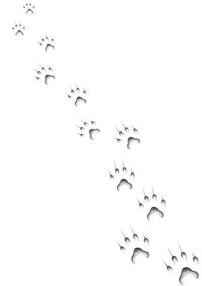 Cat paws (400×566)