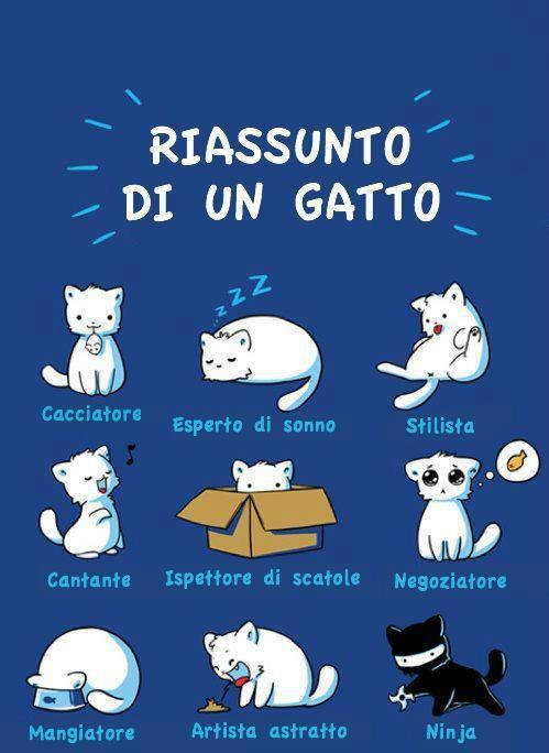 Riassunto di un gatto