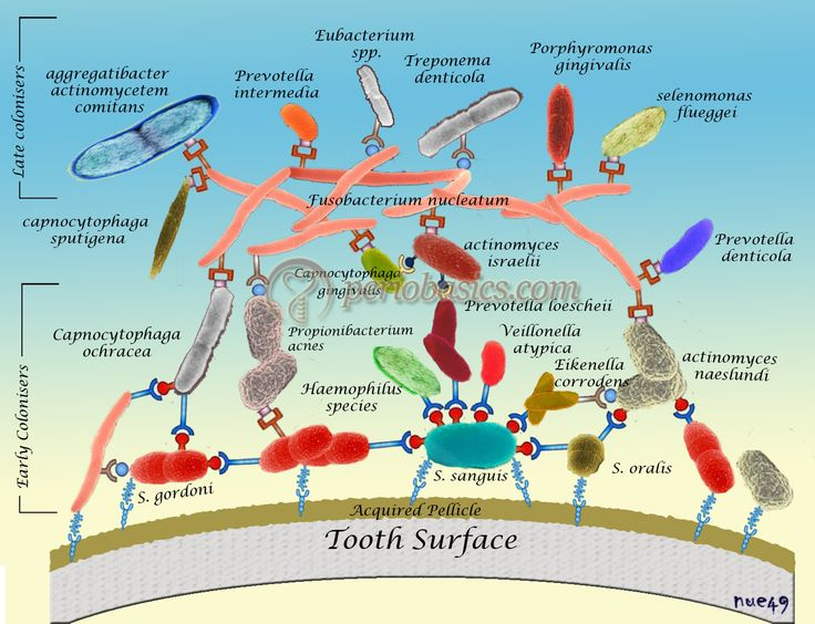 Biofilms--- An amazing array of bacteria in community on our teeth!