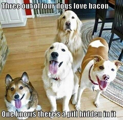 Dogs funny