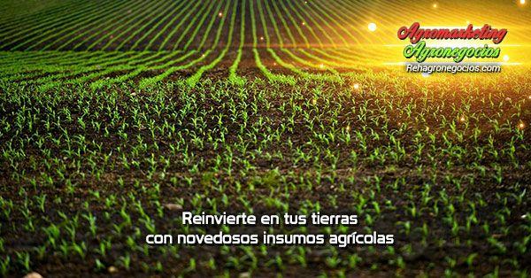 (Reinvierte en tus tierras con novedosos insumos agrícolas) Reinvierte en tus tierras con novedosos insumos agrícolas Al cosechar algún tipo de plantación, los insumos agrícolas yla importancia de los factores en el justo momento de comenzar en este rubro será de tal peso que de ellos dependerá la calidad y cantidad de la cosecha, debido a esto, la ...  https://goo.gl/xgDP66  Suscríbete para recibir nuestros correos informativos 👉 https://goo.gl/ggqUCi 👈