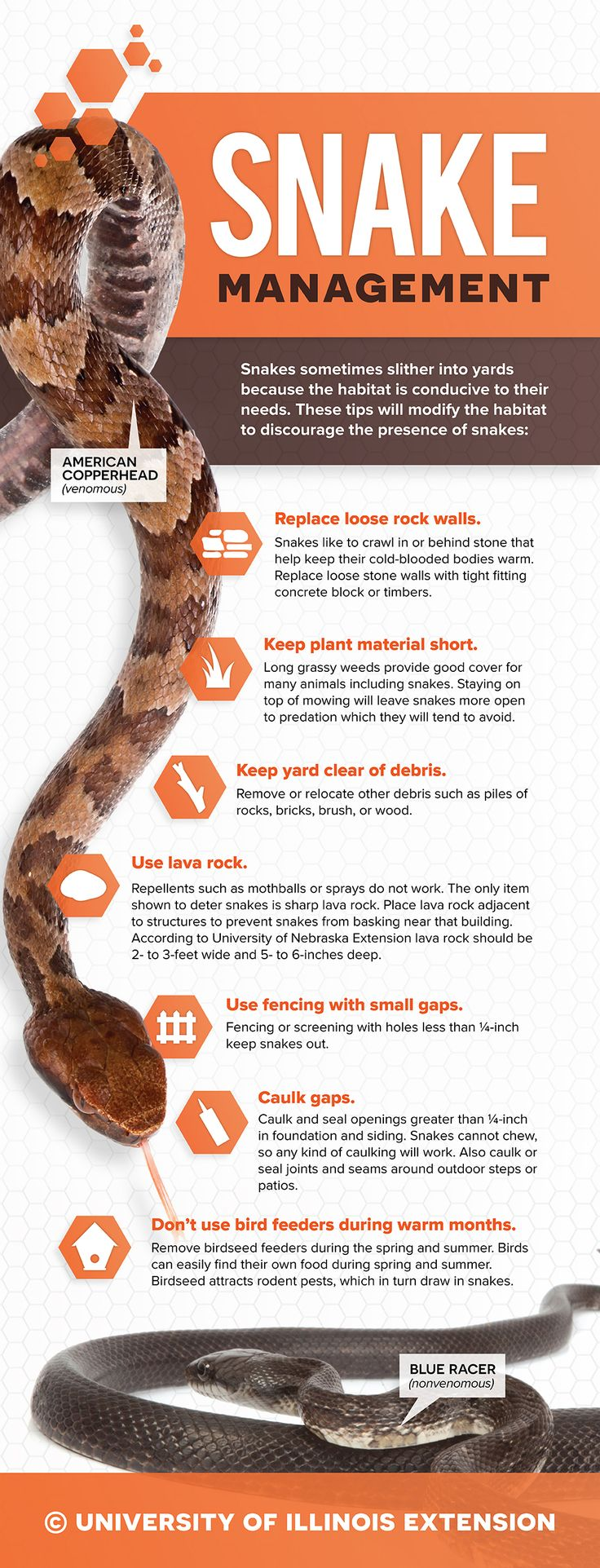 Snake Management Tips - How to keep snakes out of your backyard.