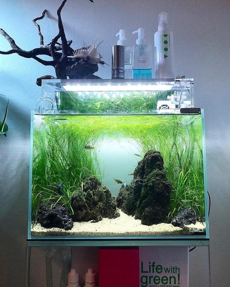 Fishkeeping Fish Tank Diy Fish Tank Aquascape