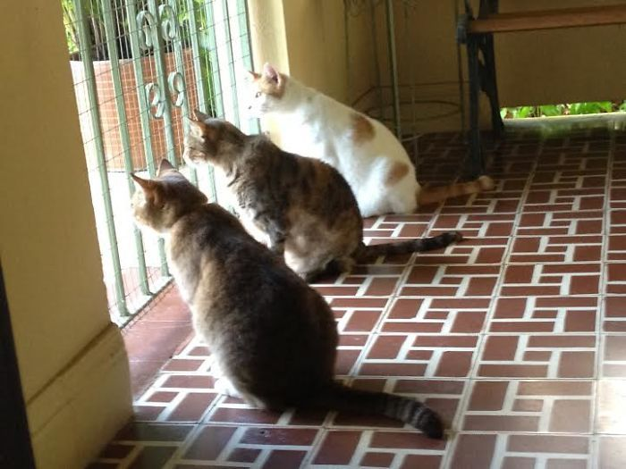 39ca9ff618528ad945459fab03ce4a30--cats.jpg