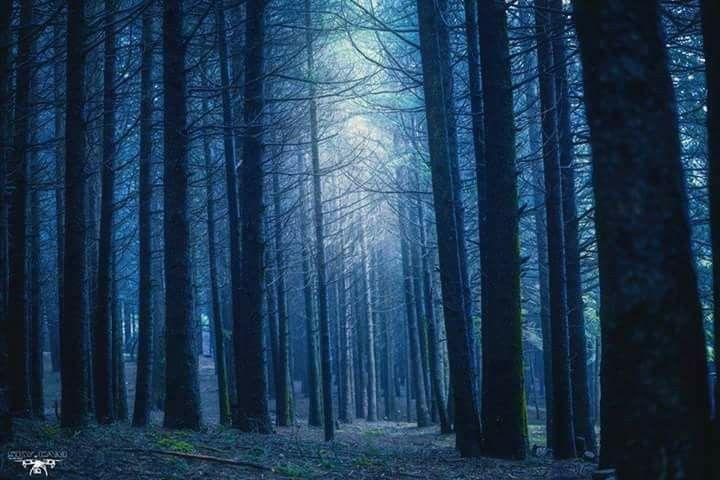 الغابة السوداء غابة الارز غابات الاطلس البليدي الجزائر Art Photography Photography Art