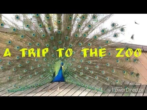 YouTube a trip to the zoo