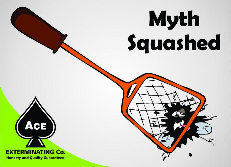***Squash A Myth Monday*** MythBug bombs can treat bed