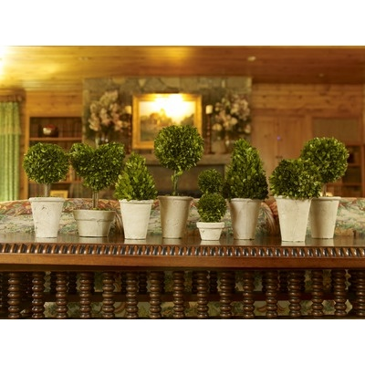 Napa Home And Garden Preserved Boxwoods Preserved Greens 8 Piece Assortment