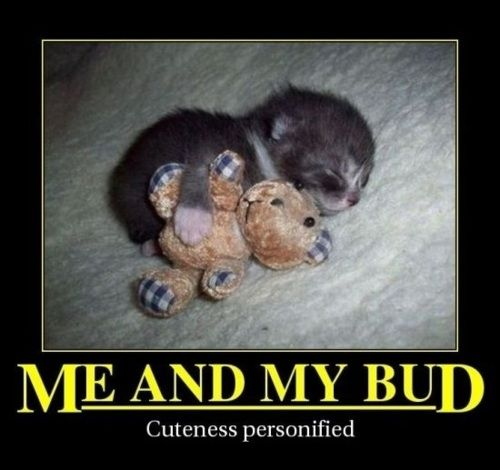 Awwwwwwww!: Cute Animal, Cats Dogs Animal, Sweet, Funny Adorable, To Cute, Kittens, Cutest Things Ev
