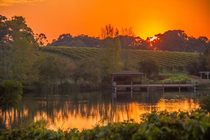 AMAZING SUNSET OVER THE LAURANCE VINES. SNAPPED BY SEAN BLOCKSIDGE #laurancewines #vineyard #sunset #margaretriver #winery
