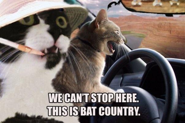 Fear and Loathing in Cat VegasJohnny Depp, Las Vegas, Hunters S Thompson, Animal Humor, Funny Cat, Funny Kittens, Hunters Thompson, Animalhumor, Fields Trips