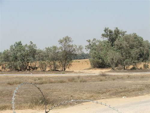 The field where Gilad Shalit was seized