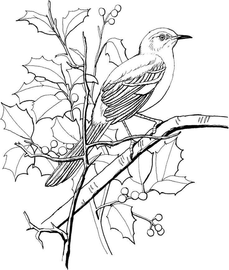 Northern Mockingbird Perched On A Tree Coloring Page From Category Select 28148 Printable Crafts Of Cartoons Nature Animals