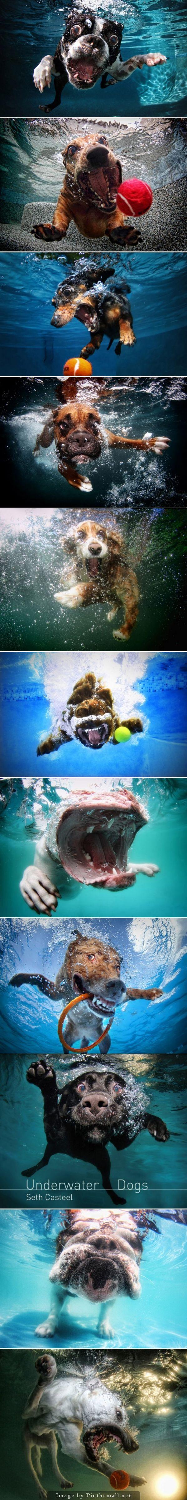 Nem tudom, hogy a fotósnak hogyan és miért jutott eszébe az, hogy vízbe csobbanó kutyusokat fotózzon, de nagyon jól tette, mert elképesztően látványos, vicces és aranyos képek születtek belőle! :-)
