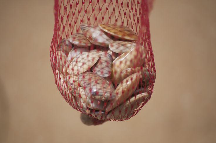 sea food :)