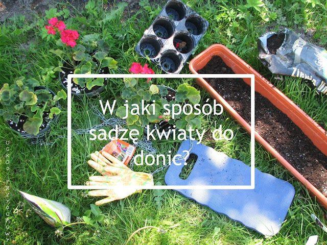 How do I plant flowers to flowerpot? W jaki sposób sadzę kwiaty do donic?