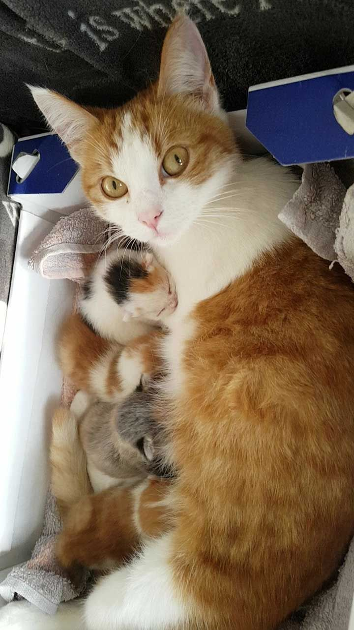 35 Cute Cat Photos That Will Make Your Life Happier Justviral Net Cute Cats Photos Cat Meowing At Night Cat Photo