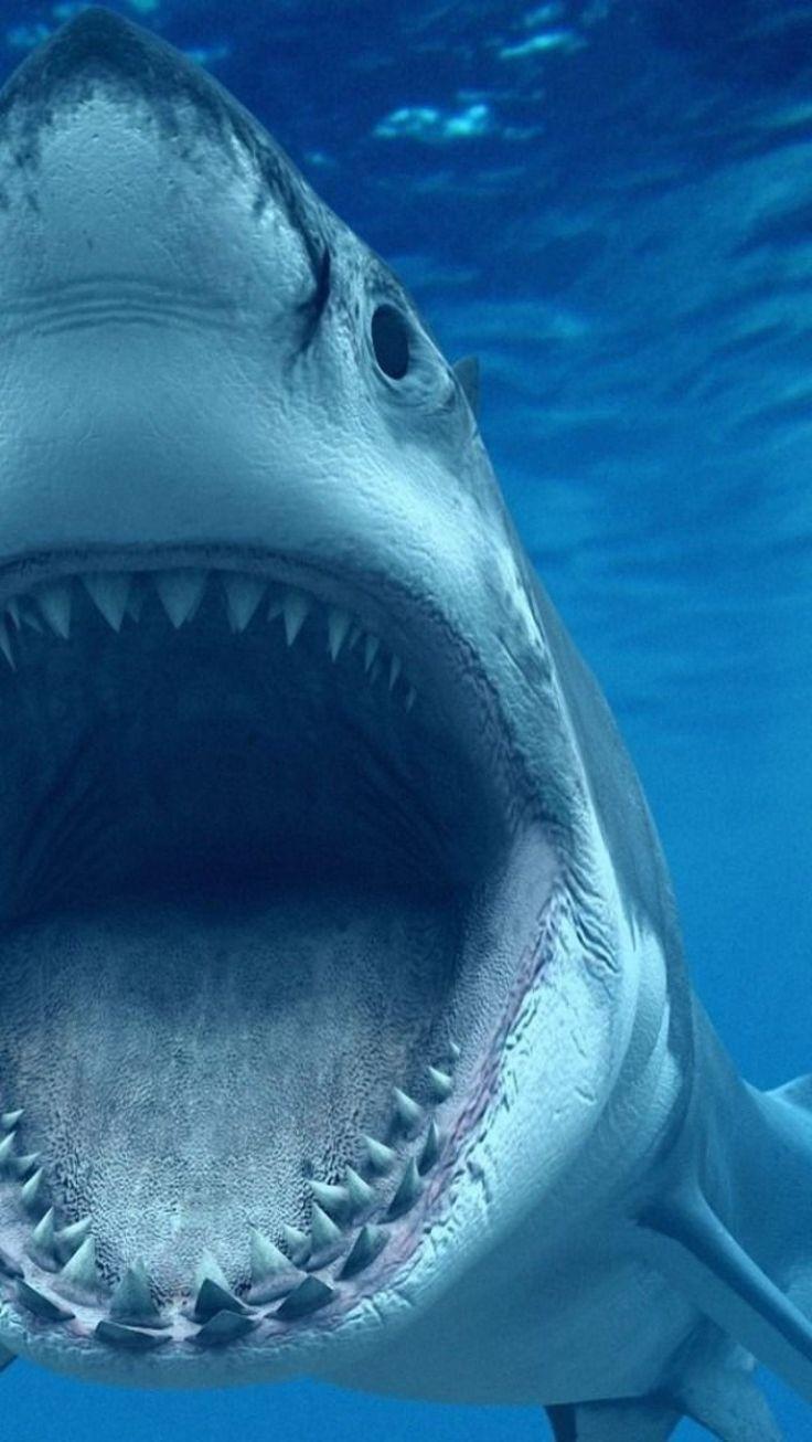 white shark blue ocean coole tiere pinterest unter wasser tier und wasser. Black Bedroom Furniture Sets. Home Design Ideas