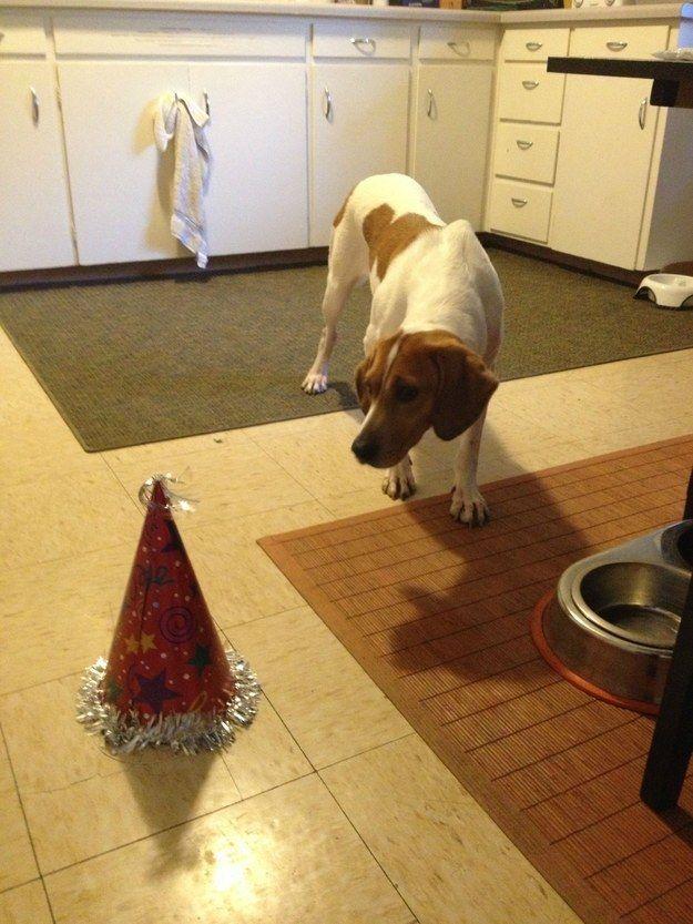 19마리의 용감한 척하는 덩치만 큰 개들 모자가 너무 무서워 지나갈 수 없는 강아지 이야기