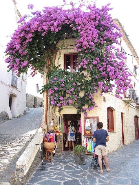 Cadaques - I can remember standing right here admiring those flowers