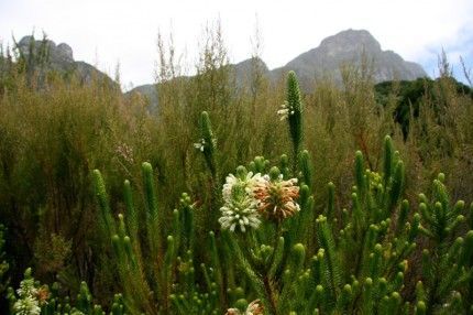 I love the textures in this pic!: Mountain National, Tables Mountain, Gardens, Mountain Backdrops, Fynbo, Eye