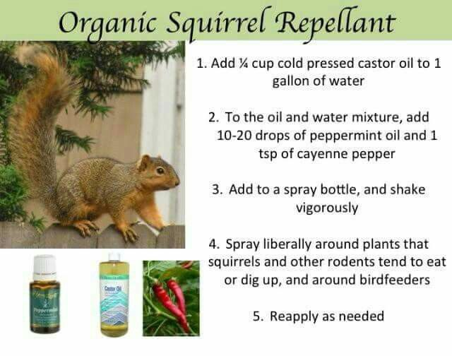 Best 25 Squirrel Repellant Ideas On Pinterest A Squirrel Squirrel Baffle And Insect
