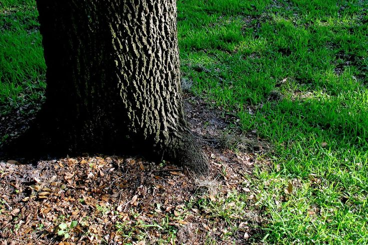Grass doesn't like shade. If you have a lot of shade trees or other low light conditions in your yard, you're never going to have a lawn. It's as simple as that. Or is it? Learn more here.