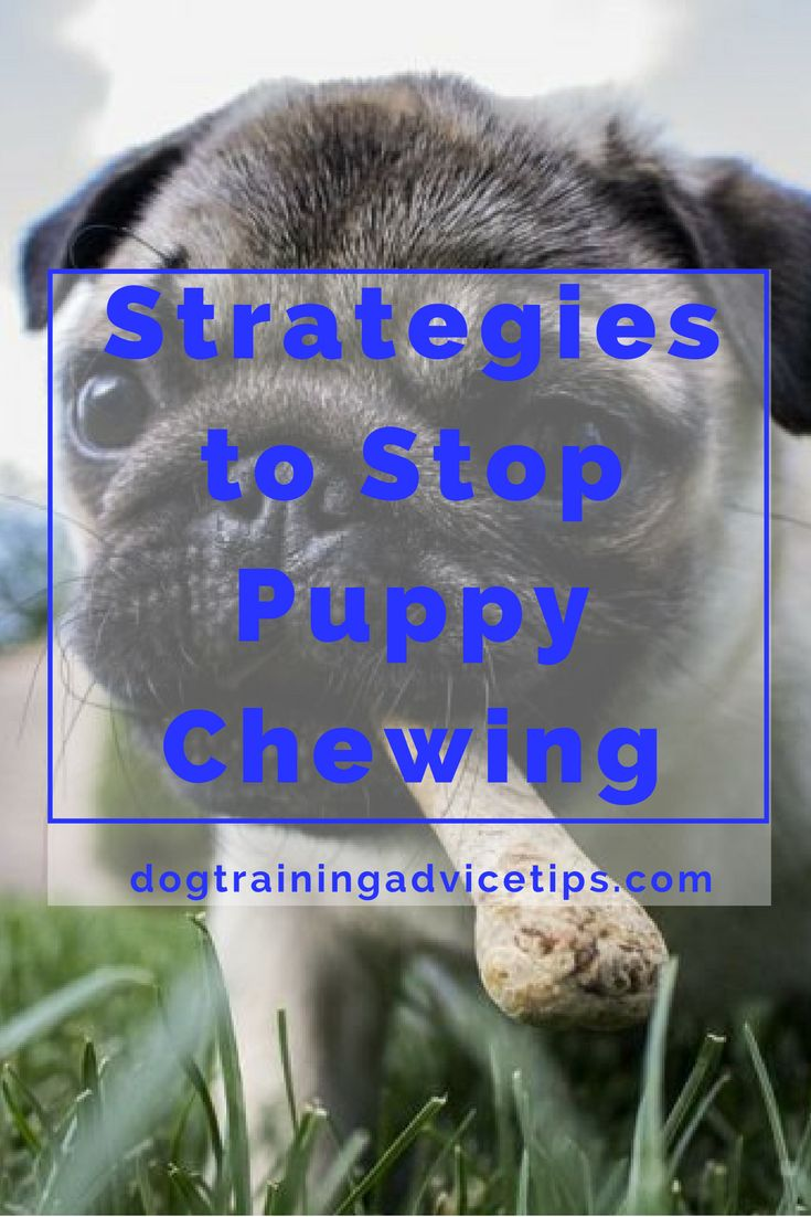how to get your dog to stop chewing things