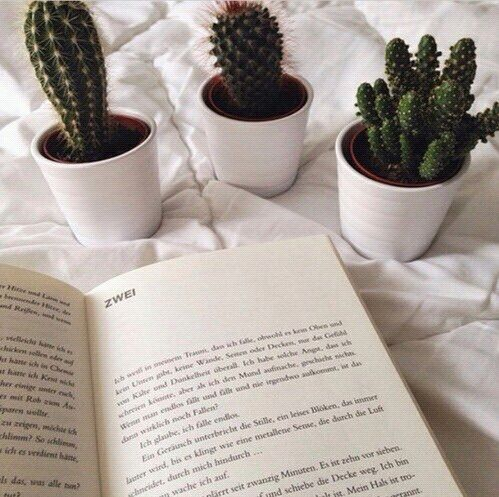 ok i know this is a plant pic but who the hecky puts pLANTS ON THEIR BED WHILE THEYRE READING?????likE R U OK