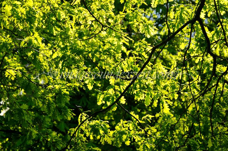 Fruhling Hintergrund grune Lichter Schatten